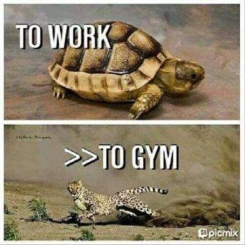 cheeatah_turtle